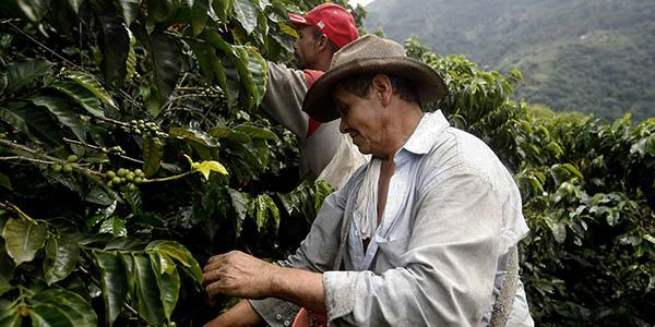 Importancia del silicio en la agricultura latinoamericana
